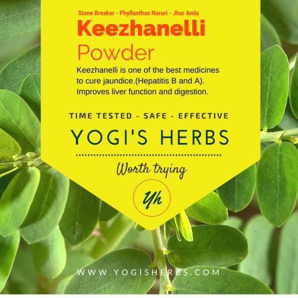 Keezhanelli Powder ( Phyllanthus niruri / Stone Breaker )- Fresh & Pure 1