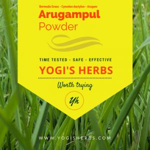Arugampul Powder ( Cynodon dactylon / Bermuda grass )- Fresh & Pure 2
