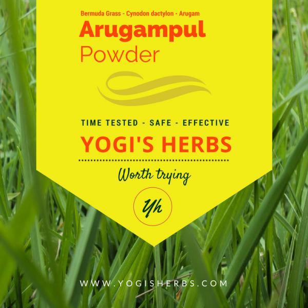 Arugampul Powder ( Cynodon dactylon / Bermuda grass )- Fresh & Pure 1