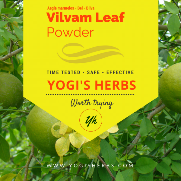 Vilvam Leaf Powder ( Aegle marmelos / Bael ) Fresh & Pure 1