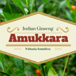 Amazing Benefits of Amukkara 1