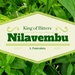 Nilavembu - King of bitters 1