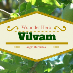 Vilvam - The Wonder Herb 1