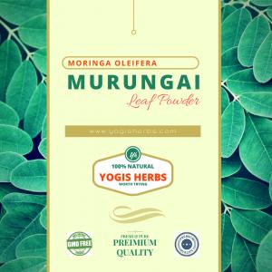 Organic Murungai Leaf Powder - ( Moringa Oleifera / Drumstick ) - Fresh & Pure 2