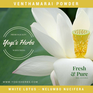 Venthamarai Powder (Nelumbo nucifera) – Fresh & Pure 2