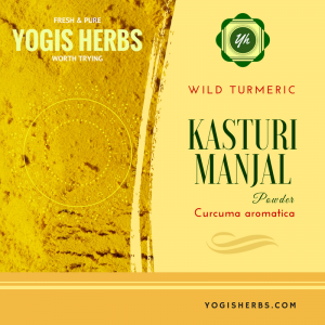 Kasturi Manjal Powder - (Wild Turmeric ) Fresh & Pure 2