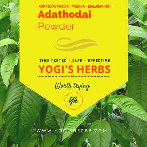Adathodai Powder (Adhatoda vasica / Adusa / Vasaka) - Fresh & Pure 2