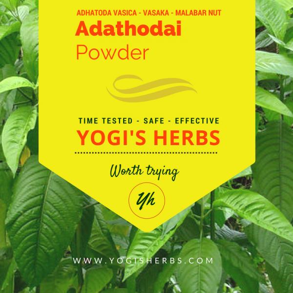 Adathodai Powder (Adhatoda vasica / Adusa / Vasaka) - Fresh & Pure 1